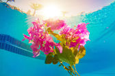 Flower underwater — Stock Photo