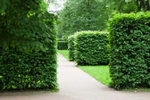 Pathway and green bushes — Stock Photo