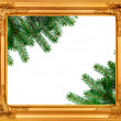 The spruce branches in a wooden frame — Stock Photo #36257043