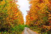 Autumn in the woods — Stock Photo