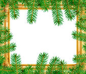The spruce branches in a wooden frame — Stock Photo
