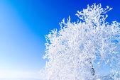 Snowy tree — Stock Photo