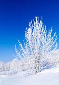 Snowy tree — Stock Photo