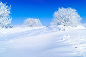 Snow-covered trees — Stock Photo