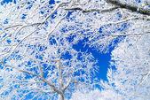 Background snow tree — Stock Photo