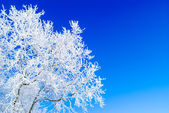 Background snow tree — Stock Photo