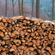 Stacked firewood in the forest — Stock Photo