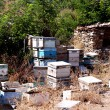 Beehives being stored in field — Stock Photo #21110007