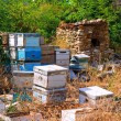 Beehives being stored - Stock Photo