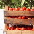 Boxes of tomatoes at outdoor street market - Stock Photo