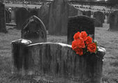 Blank headstone in graveyard with bunch of red roses — Stock Photo
