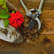 Gardening tools on old wooden table — Stock Photo