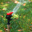 Stock Photo: Automated garden lawn sprinkler