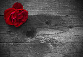 Red rose on a rustic wooden background — Stock Photo