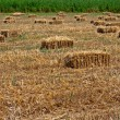 Bales of hay in farmers field — Stock Photo