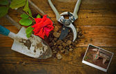 Gardening tools on a rustic wooden table — Stock Photo