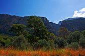 Saklikent gorge, turquia — Fotografia Stock