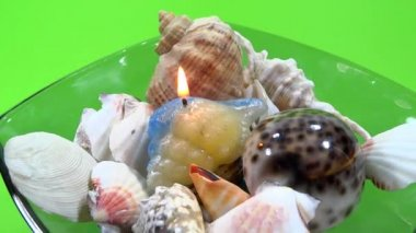 Marine shell ornament rotated — Stockvideo
