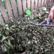 Stock video: Person clearing dry tree branch