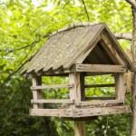 Bird nest in the woods — Stock Photo #48101557