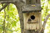 Abandoned bird house in the woods — 图库照片