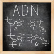 ADN - DNA in Spanish, French and Portuguese. - Stock Photo