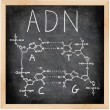 ADN - DNA in Spanish, French and Portuguese. — Stock Photo