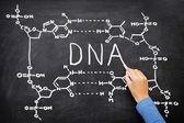 DNA blackboard drawing — Stock Photo