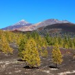 Tenerife volcano landscape - Stock Photo