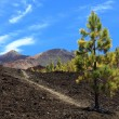 Stock Photo: Tenerife volcano teide landscape
