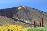 Tenerife Mountain Teide — Stock Photo