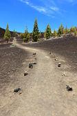 Path for hiking, Tenerife — Stock Photo