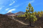 Tenerife volcano teide landscape — Stock Photo