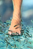 Feet pedicure fish spa — Stock Photo