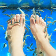 Fish spa pedicure - Stok fotoğraf