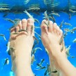Fish spa pedicure - Stock Photo