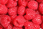 Raspberries - raspberry texture background — Stock Photo