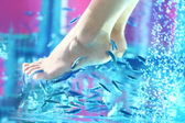 Pedicure fish spa - rufa garra — Stockfoto