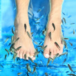 Fish Spa — Stock Photo