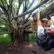 Stock Photo: Banytree and hiker, Maui, Hawaii