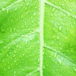 Green leaf texture background — Stock Photo