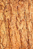 Detail of tree bark — Stock Photo
