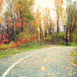 Foliage - Fall rural road with autumn leaves — Stock Photo