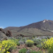 Tenerife  Teide and Cinchado rock nature landscape scenery. — Stock Video