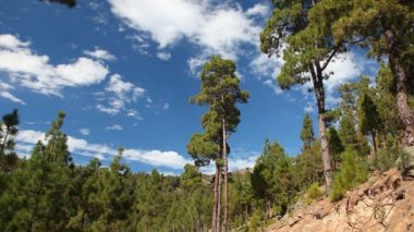 Forest nature landscape on Tenerife Vilaflor. — Stock Video
