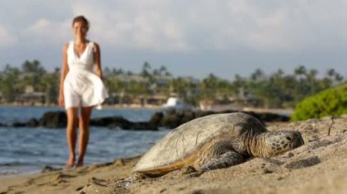 Hawaii scene - Sea turtle on beach woman walking — Stock Video