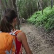 Hiking woman in forest — Stock Video
