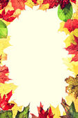 Autumn leaves frame — Stock fotografie