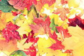 Leaves - fall leaf background texture — Stock Photo