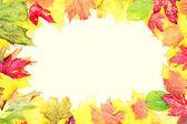 Leaves fall frame — Stock Photo
